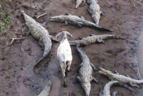 عکس های بی نظیر و بامزه از حیوانات