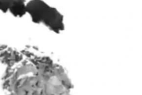ویدیوی محبوب این روزهای فضای مجازی ؛ بچه خرسی که نا امید نمی شود