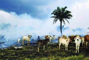 انسانها ٦٠ درصد حیوانات را از بین بردهاند/جهان و انقراض ششم(ویدئو)