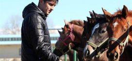 عکس اسبی که سردار آزمون نیم میلیون دلار خرید